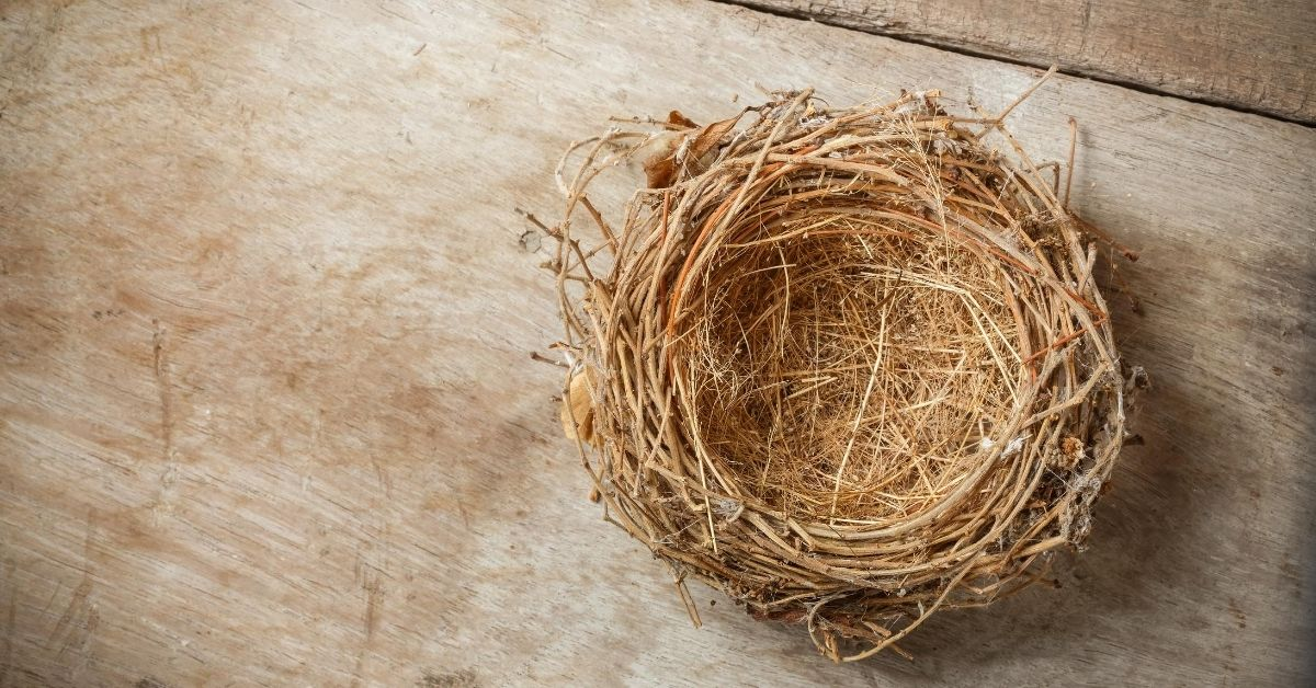 You Have an Empty Nest – Now What?